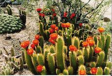 The desert blooms.