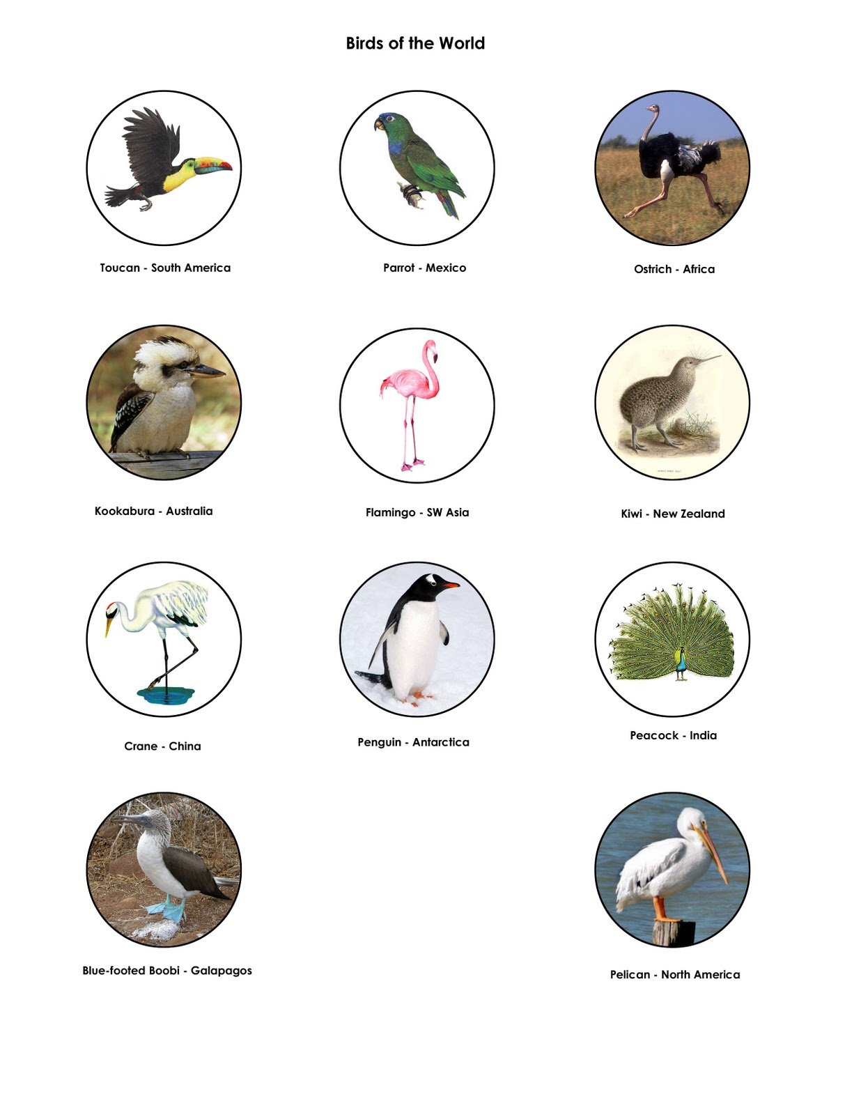 types of birds and their names