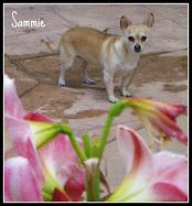 Sammie & the amaryllis