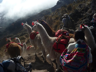 Llamas on the way to Machu Picchu