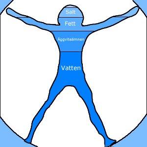 vatten i kroppen