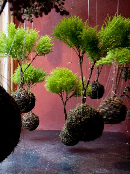 Around homes: String gardens