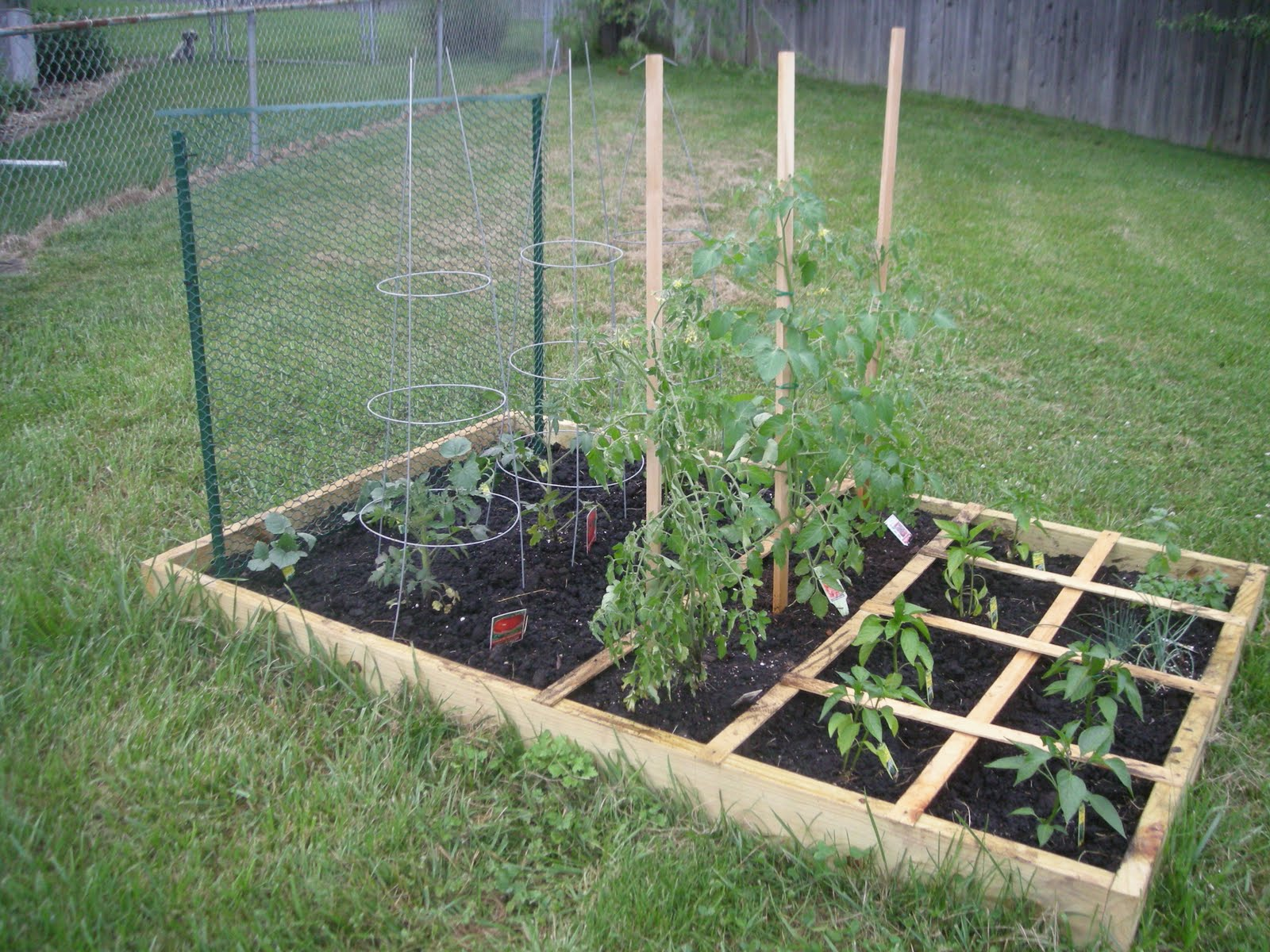Here Is My Square Foot Garden: Home Design Ideas