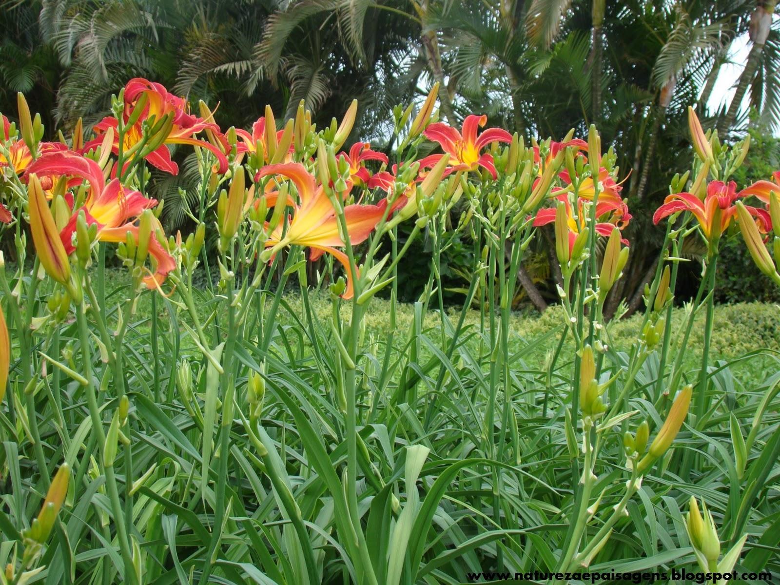 pedras para jardim joinville: de cores. As flores são batizadas com nomes de mulheres (Daniela