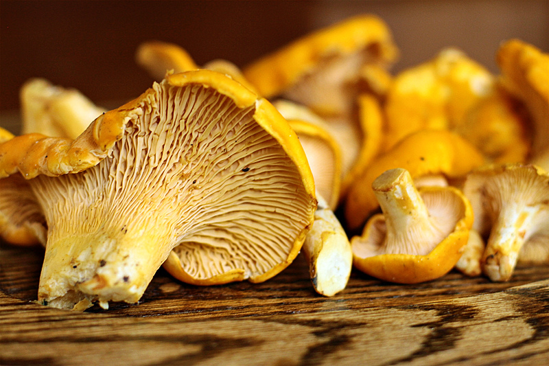 http://1.bp.blogspot.com/__DL-kIetw04/TMG8L92V5CI/AAAAAAAAAaM/1fRDHlSS104/s1600/Golden-Chanterelles-on-oak.jpg