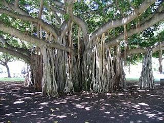 http://1.bp.blogspot.com/__EzFEHn2YBI/Sar1UST7TEI/AAAAAAAAAEY/bofWA868HJw/s400/amazing_tree10.jpg