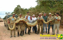 Sucuri - Anaconda - in de Pantanal