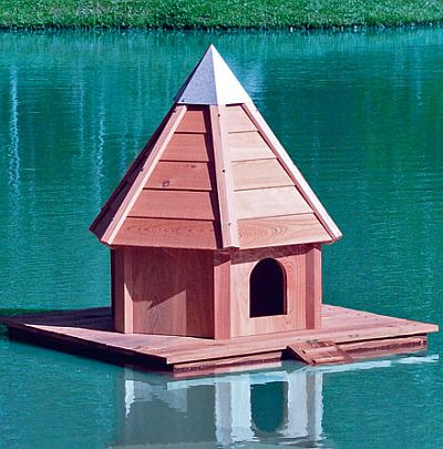 Building A Mallard Duck House