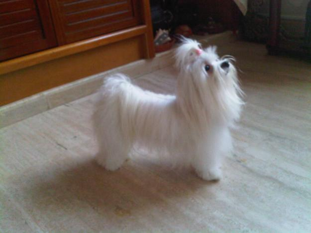 Blog de Perros Miniaturas