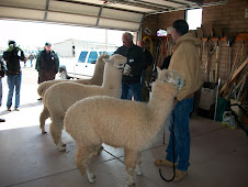 Evaluating alpacas for purchase class
