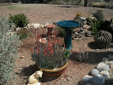 New bird bath and blooming Aloe