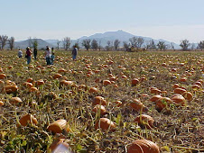 Apple Annie's Pumpkin Patch