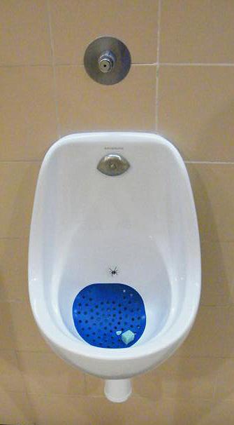 El arte de la araña en WC