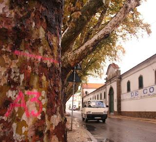 Estradas de Portugal analisa árvores de Sintra