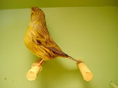 gloster variegado amarelo