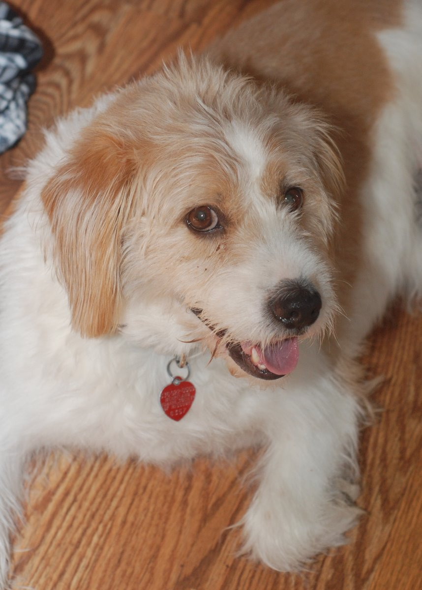 Image Result For Can Dogs Resource