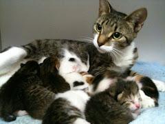 Miss Caroline (8 kittens)