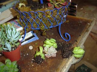DIY Succulent Planter | organizingmadefun.com