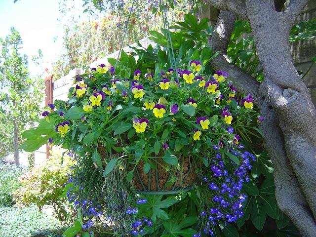 Hanging Flower Basket | Organizingmadefun.com