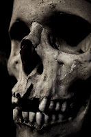 Skull photo from Wikipedia