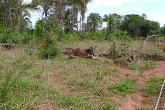 Desmatamentos causam aparecimento de areais em áreas rurais de Araguaína.