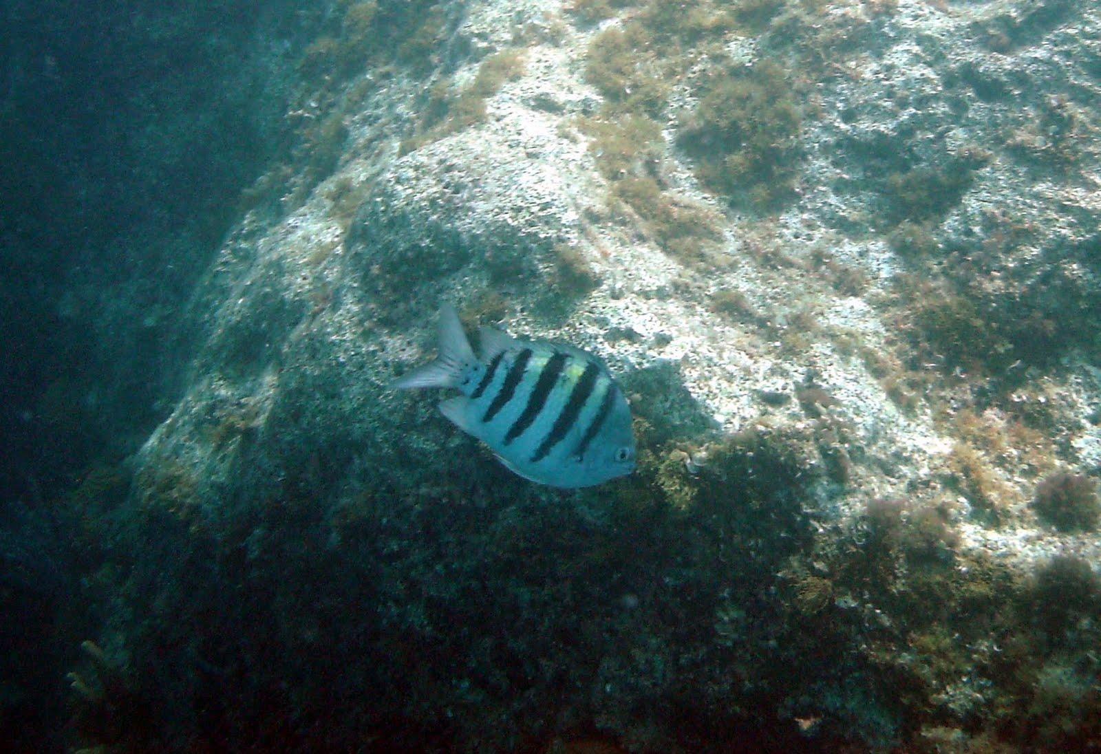 Vernon bermuda workshop fish found in bermuda for Fishing in bermuda