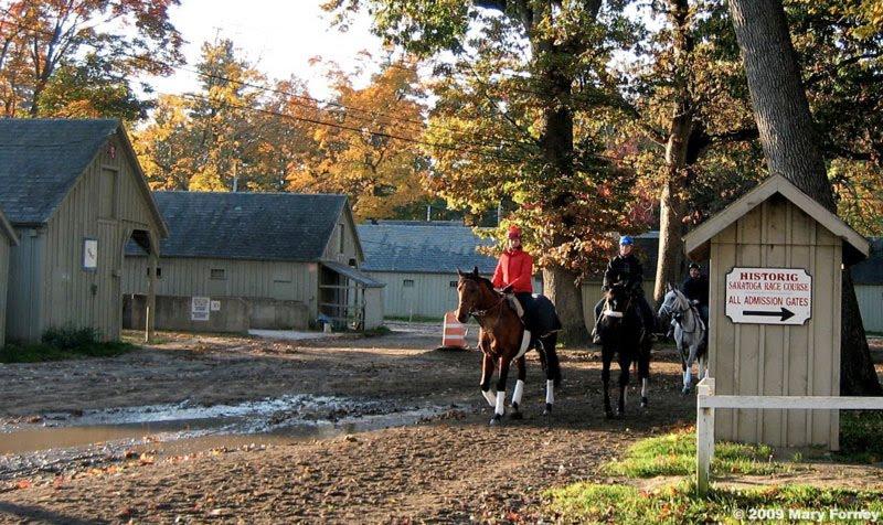 Saratoga stables