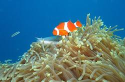 Diving in Candi dasa
