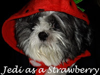 Jedi as Strawberry