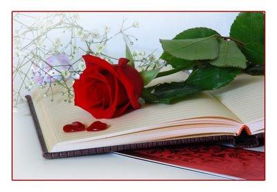 agenda,rosa,vermelha,flor
