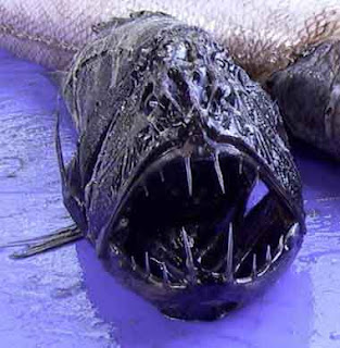 Fangtooth Fish deep sea ocean