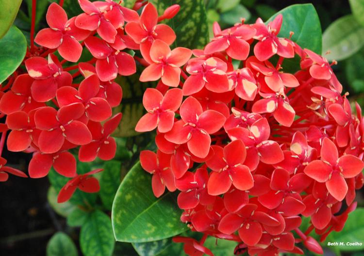 flores jardim de sol : flores jardim de sol:flor de pedra é uma suculenta. Pode deixar no sol e molhe uma vez