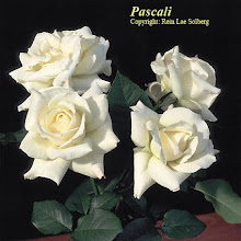 Pascali