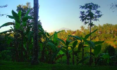 Zicht op een vulkaan vanaf het terras van Villa Sanggingan, een hotel in Ubud