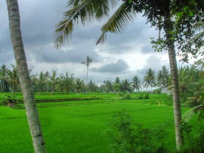zicht op de rijstvelden vanuit Villa Sabandari een boutique hotel in Ubud Bali