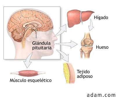 HGH Plus: Que es la hormona de crecimiento?