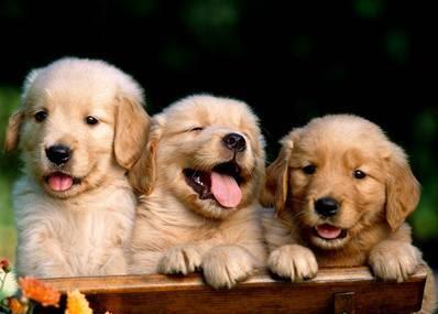 mi_volimo_pse
