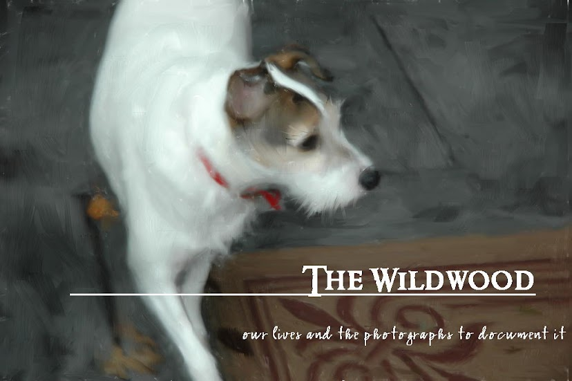 The Wildwood