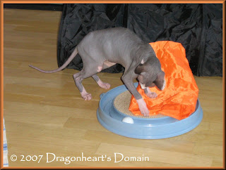 Dragonheart playing with his trackball