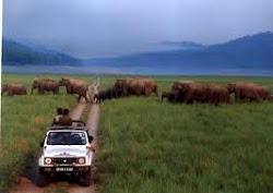 Jim Corbett National Park- Safari
