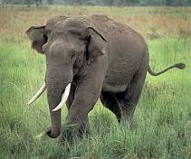 Jim Corbett National Park- Elephant walk