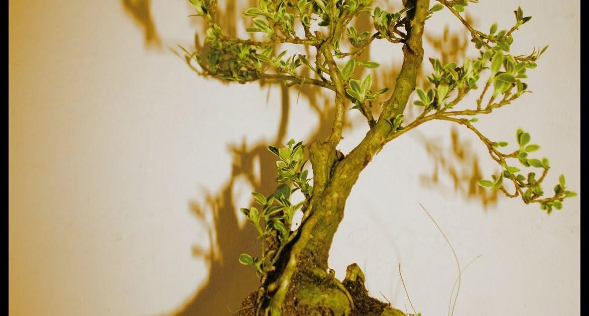 Il pane e le rose un regalo una pianta una storia for Una storia a pianta aperta