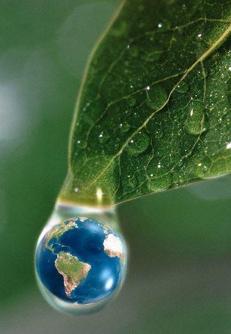 Mundo Verde!