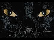 A Black Cat Crossed My Path.