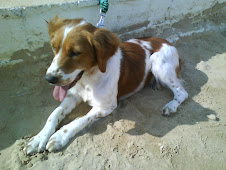 Perrito perdido en Plaza de Abastos el 26 de junio