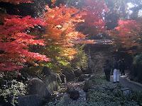 徳川園庭園 せせらぎの紅葉