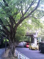 ゴール後、東山動物園から植物園への道を歩く