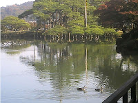 霞ヶ池で遊ぶ水鳥