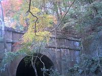 トンネルを背景にグラデーションもみじ