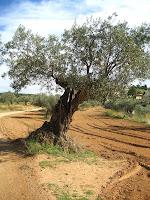 Camí antic de Samalús